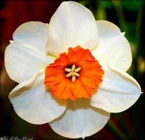 Oranż i biel - królowe sezonu letniego